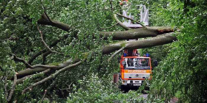 Stürmischer Tag für die Feuerwehr – Fahrer sieht umgestürzten Baum zu spät