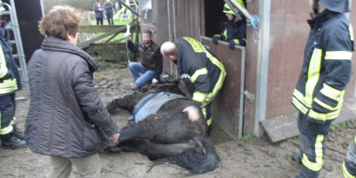 Tierrettung in Niederwalluf: Feuerwehr hilft Pferd auf die Beine