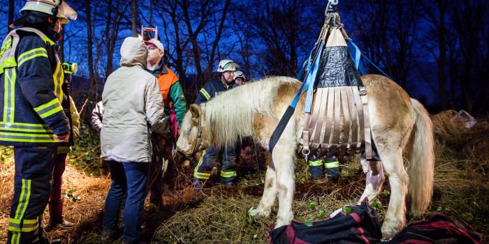 Feuerwehr rettet Pferd aus Grube am Fort Biehler