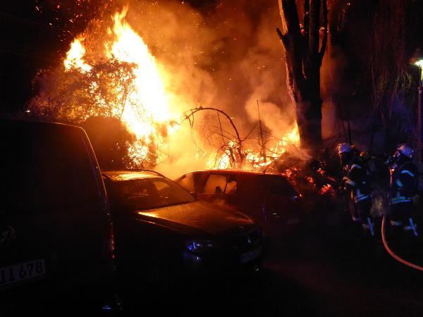 Zwei Pappeln stehen in der Mainzer Neustadt voll in Flammen