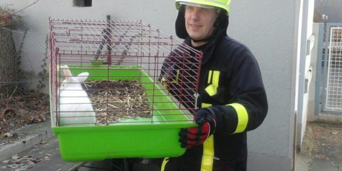 Feuerwehr rettet Kaninchen – Küchenbrand schnell gelöscht