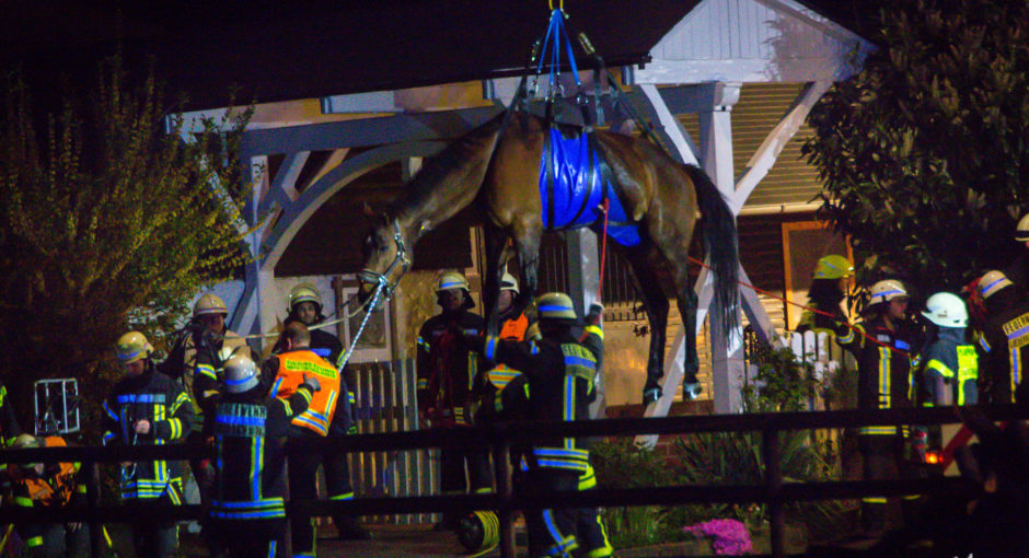 Aufwändige Tierrettung: Feuerwehr muss Pferd aus Swimmingpool heben
