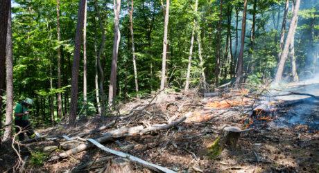 Grillfeuer verursacht Waldbrand