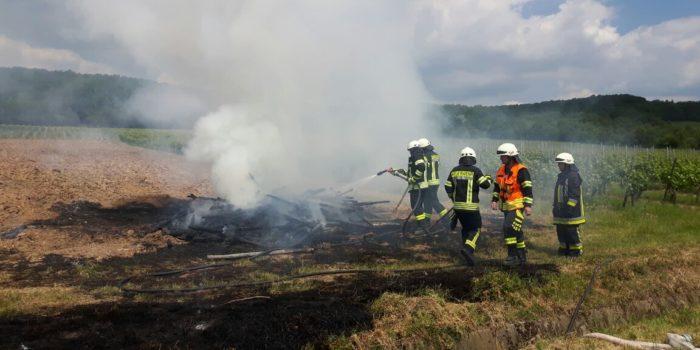 Feuer im Weinberg bei Hallgarten