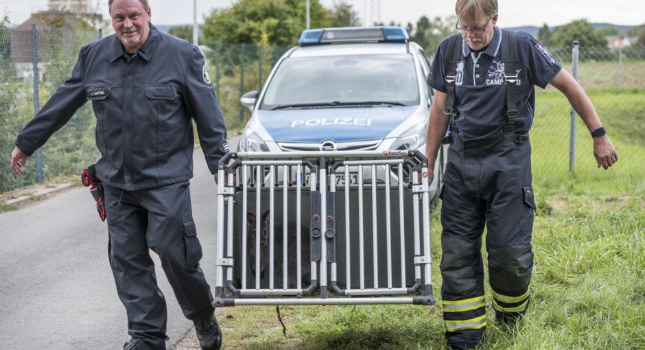 Feuerwehr und Polizei fangen entlaufenes Känguru