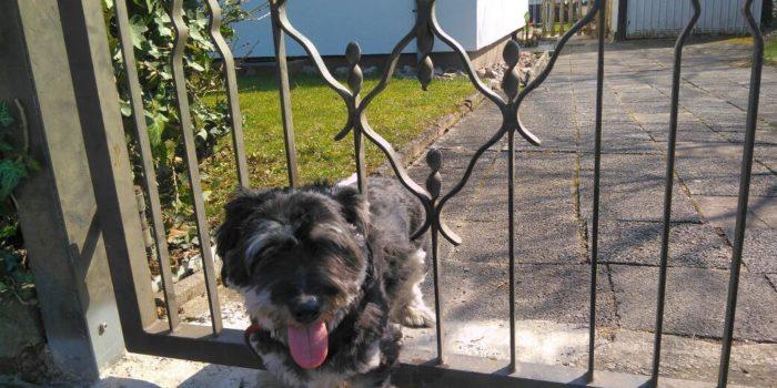 Feuerwehr Raunheim rettet eingeklemmten Hund