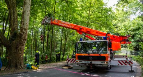 Ausgerissenes Pferd sorgt für großen Feuerwehreinsatz in Kronberg