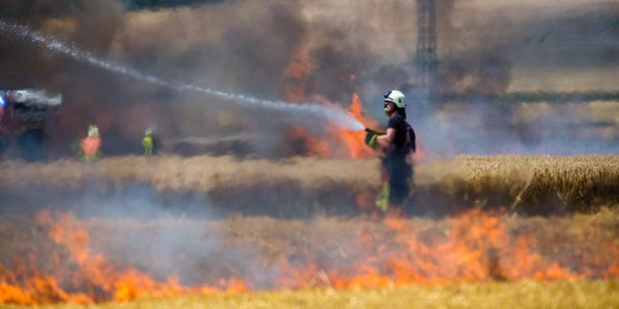 Große Rauchentwicklung – Getreidefeld bei Flörsheim in Flammen