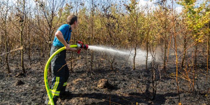 Lagerfeuer löst Waldbrand zwischen Wörsdorf und Wallrabenstein aus