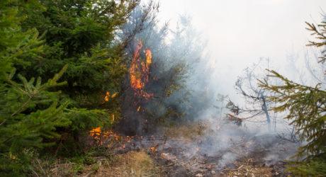 Waldbrandgefahr: Schließung aller Grillplätze in Wiesbaden