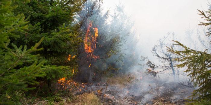 Waldbrand beschäftigt Feuerwehr Wiesbaden stundenlang